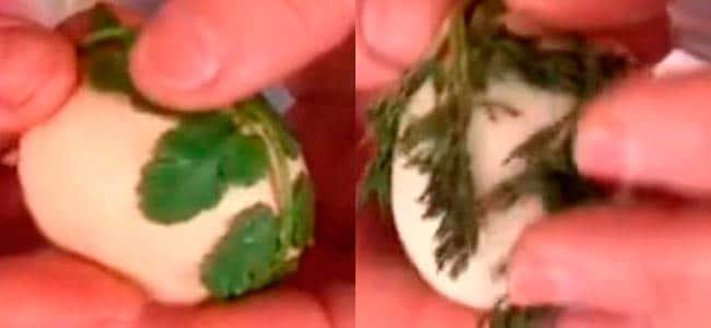 яйца в луковой шелухе с рисунком и узорами