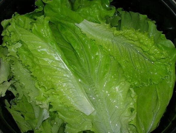 листья салата замочить в воде